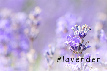 Lavender Gift Ideas